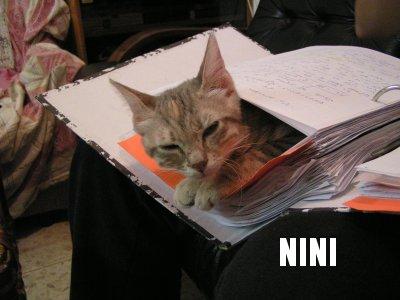 Nini in Hadar's Physics binder